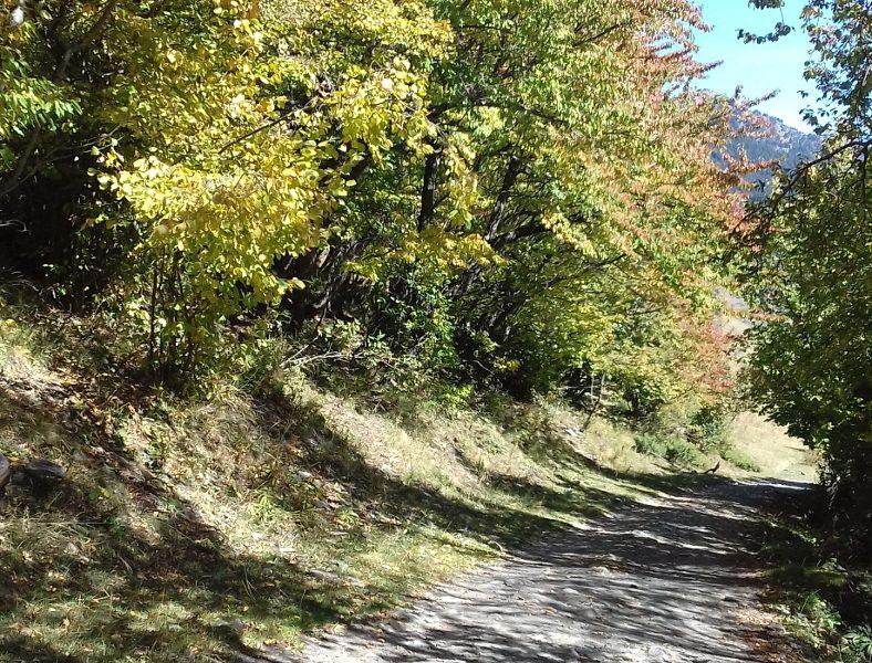 Sentiero d'autunno in Val d'Aran