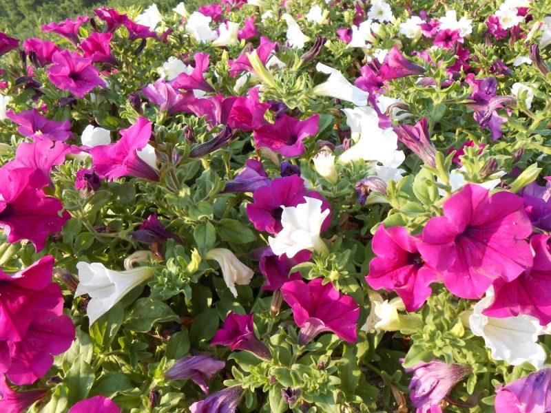 Fiori in giardino, una fonte di ispirazione