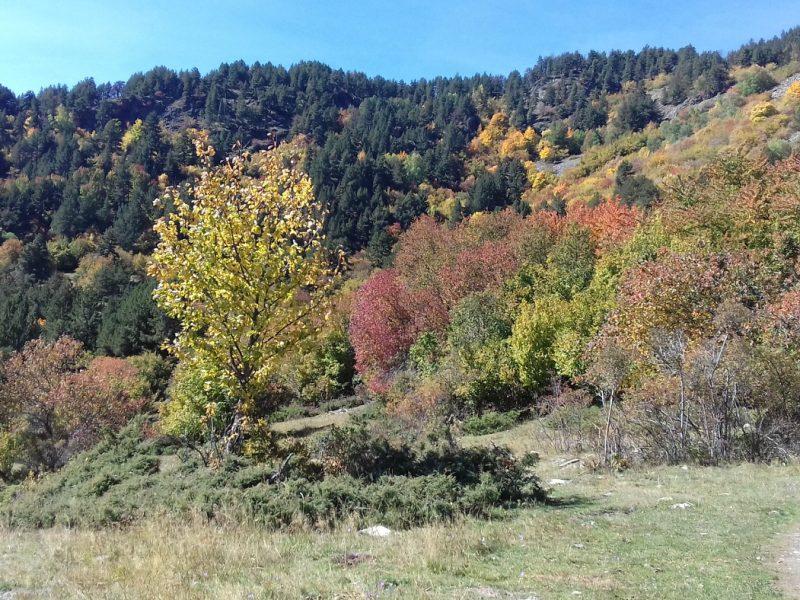 Paesaggio autunnale in Val d'Aran