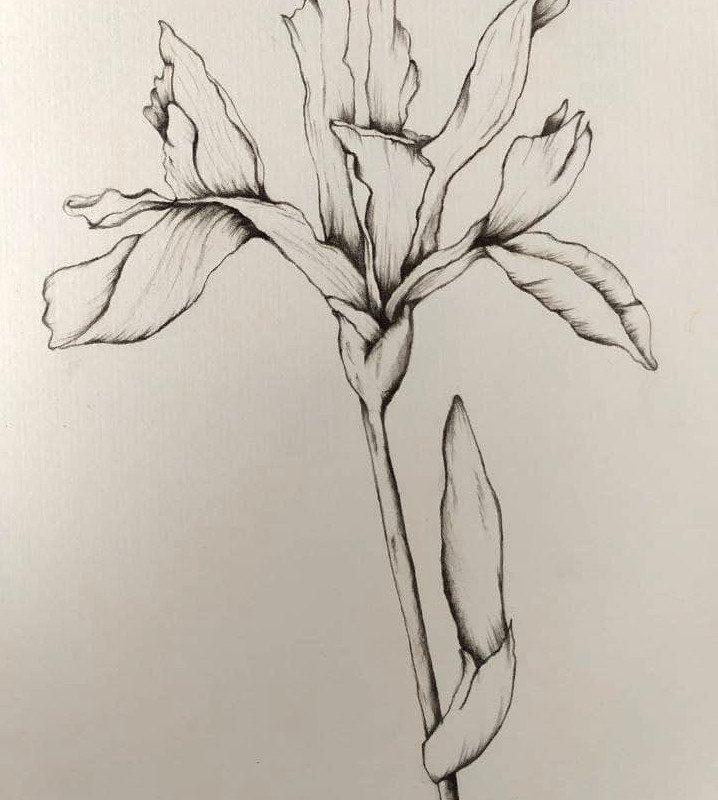 EriArte - Iris - Matire